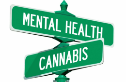 Cannabis Mental Health Illnesses