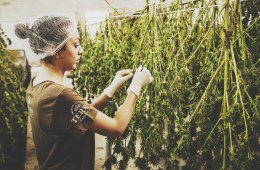 How to Cultivate Weed the Old School Way 1