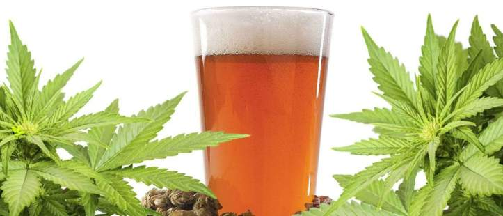become-weed-connoisseur-pairing-bud-perfect-ipas-hero