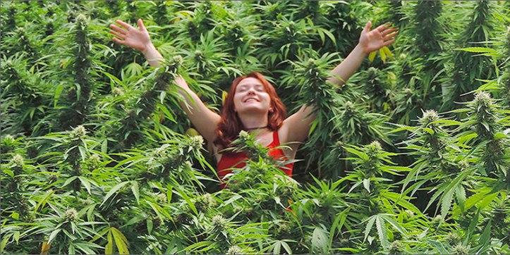 organic hero The Definitive Guide To Growing Organic Marijuana