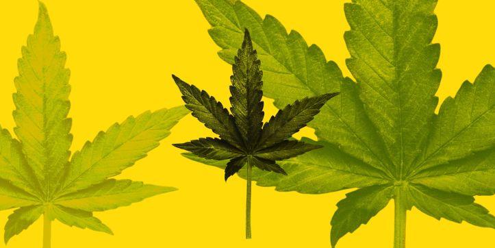 esq-cannabis-1529680558