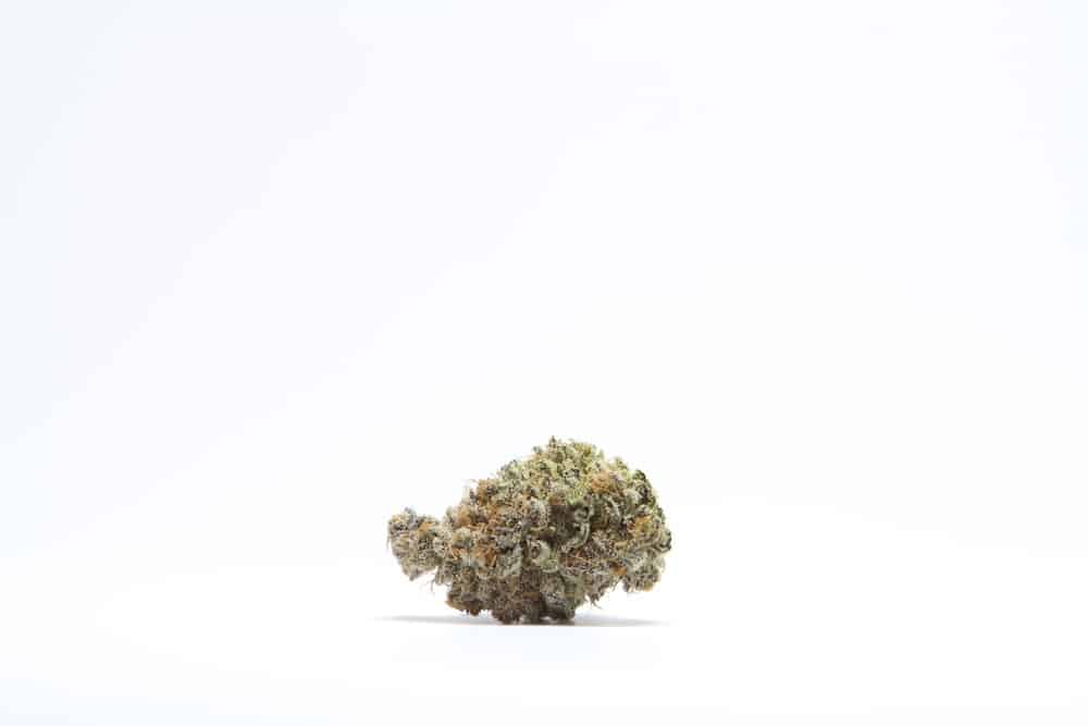 The Winners of the Cannabis Cup Colorado 2019