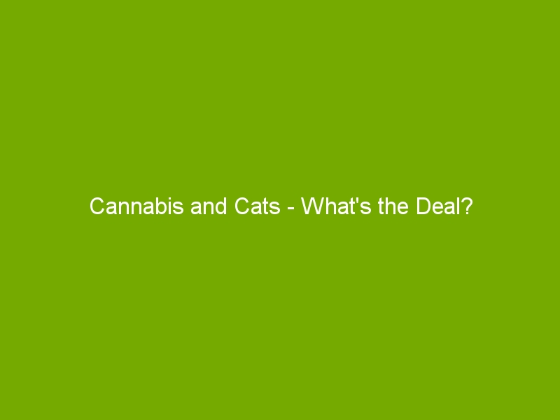 Cannabis and Cats – What's the Deal?