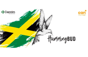 From the highlands of Jamaica to German pharmacies