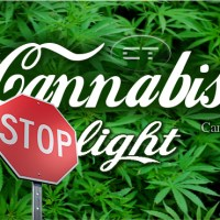 Non ci lasciano vendere cannabis light in Ticino!