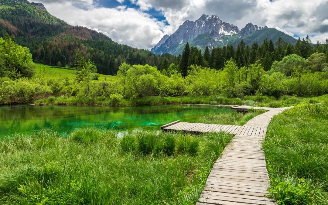 Cannabis in Slowenien. Von Maurice Veldman für Sensi Seeds