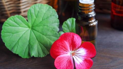 CannaGlobe Key Cannabis Terpenes Geraniol