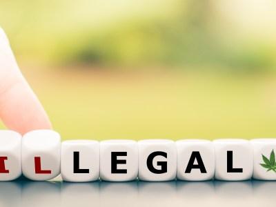 Understanding Marijuana & Hemp Law