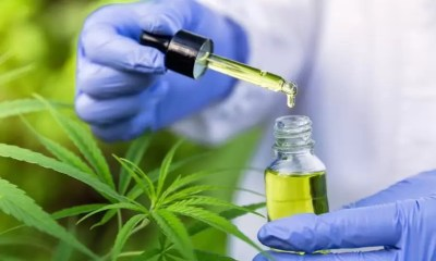 A doctor examines CBD oil