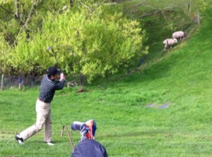 Ducks Sheep and Golf