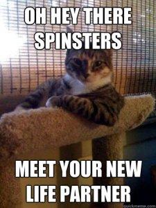 spinster cat