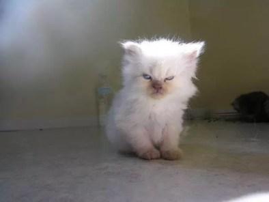 grumpy-kitten