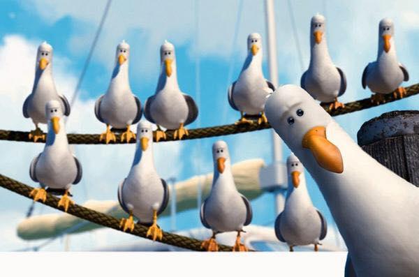 nemo seagulls