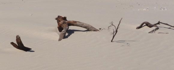 31.driftwood4
