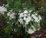 5.plants2