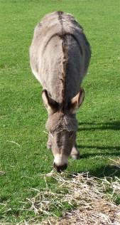 15.Donkey Sanctuary