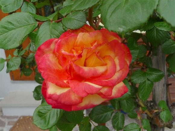 28.flower