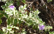 30-flowers