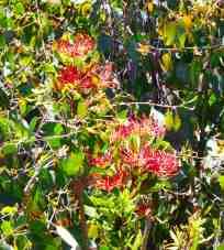 35-flora