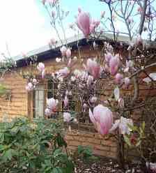 33.magnolia