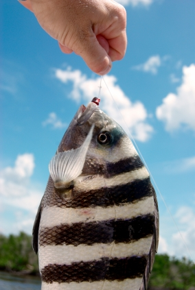 A Tampa Bay Fishing Guide To Fishing A Mild Florida Winter