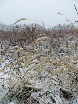 winter prairie