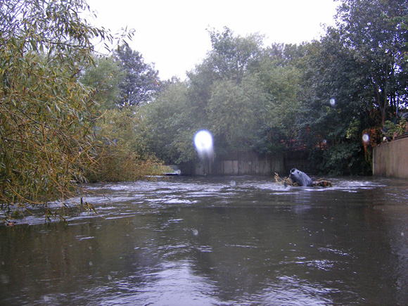 Kayaking the River Wandle - looking downstream towards low pipe section