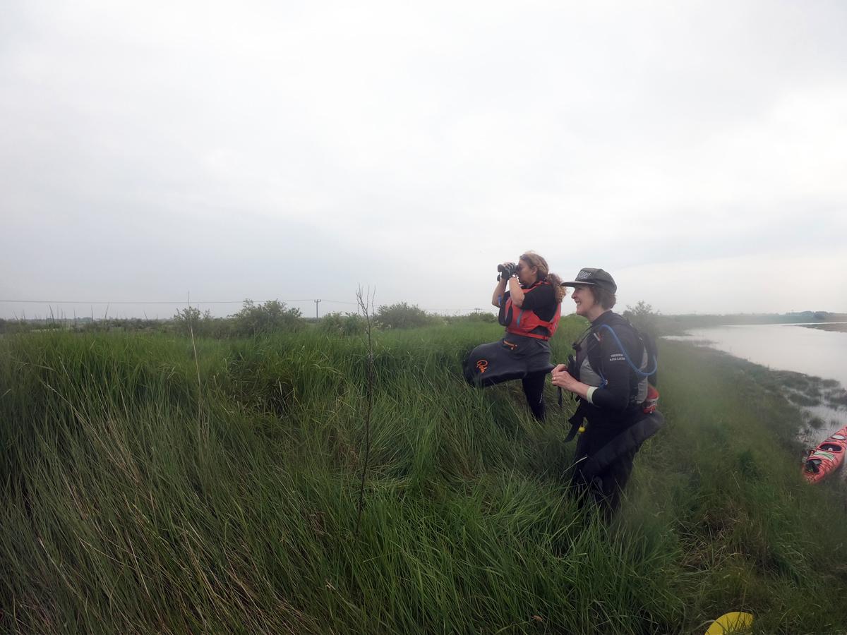 Using binoculars to watch cuckoos on Canvey Island