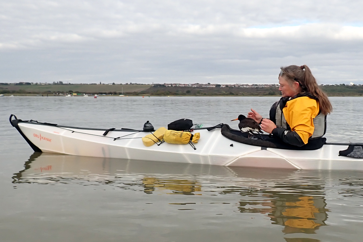 Kayaker holding an injured oyster catcher on the deck of her kayak