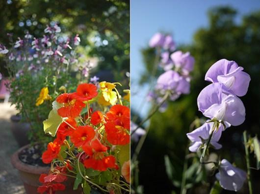 8月初めの庭