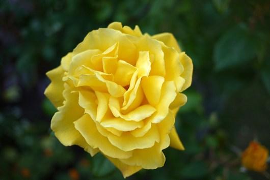 radiantperfume2