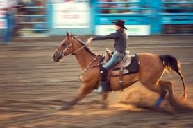 Horse in focus