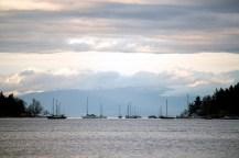 Boats moored at Protection Island