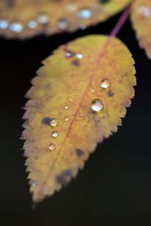 Leaf and drops