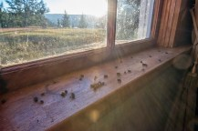 Sun streaming in to the old church and the fly graveyard formed on its windowsill.