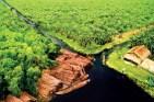U-Minh-Ha-Forest