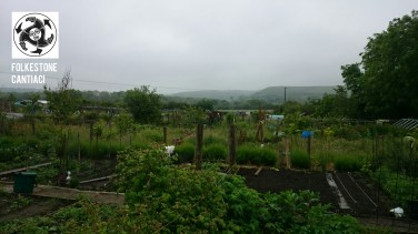 Cantiaci, Folkestone, Community, Transition Town, Allotment, Produce, Radishes, Beans, Courgettes, Grown Your Own