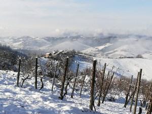 Panorama d'inverno dei Colli Piacentini da Cantina Visconti