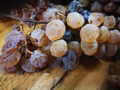 uve per il Vin santo di Vigoleno