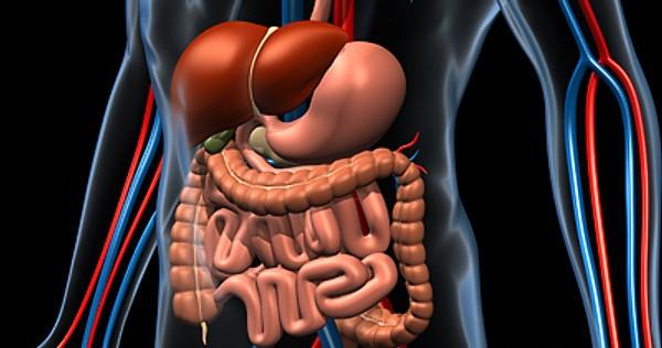 Digestive_B.jpgfbb4f108-04c7-4136-ab4e-aa164f3c2860Larger