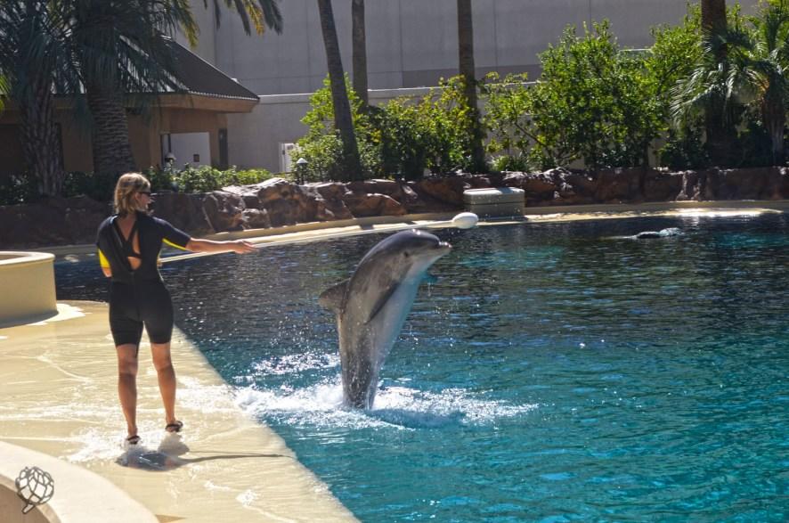 Secrete Garden golfinhos5