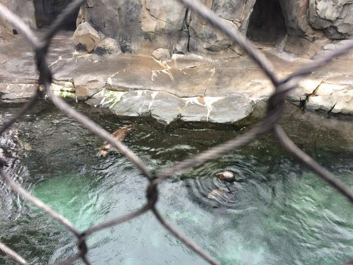 Zoo-de-Washington-focas2