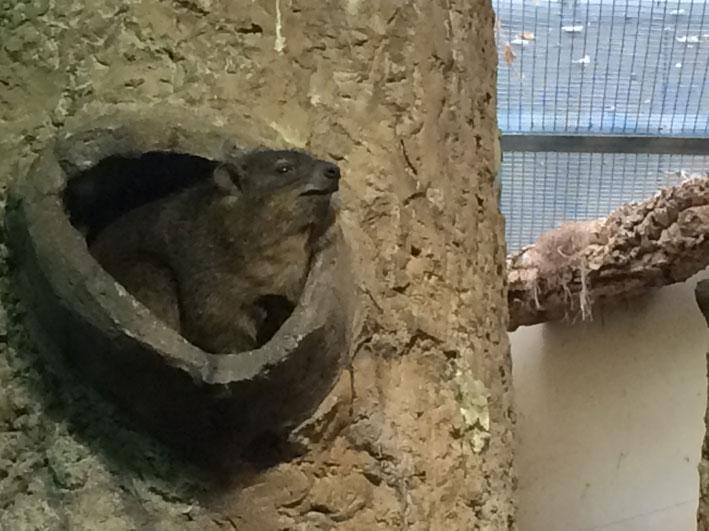 Zoo-de-Washington-roedores