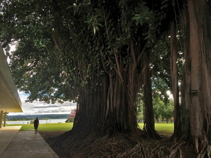Brasilia-Palace-arvore