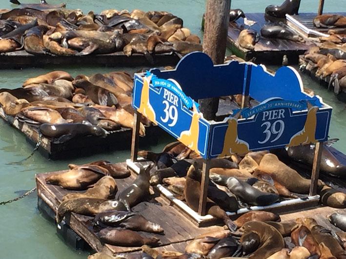 15-atracoes-imperdiveis-em-San-Francisco-pier392