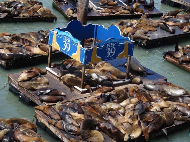 San-Francisco-fishermans-wharf-pier-39-leoes