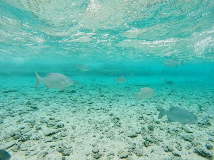 Como-e-o-passeio-a-Haines-Cay-e-Acuario-peixes