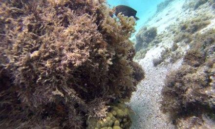 Maragogi: tudo sobre as famosas piscinas naturais
