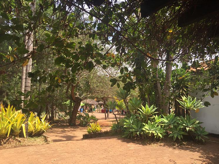 cafe-no-jardim-botanico-de-brasilia-2