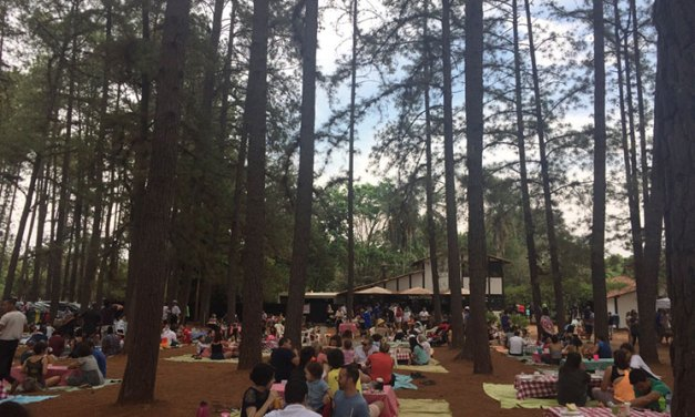 Café num bistrô no Jardim Botânico de Brasília